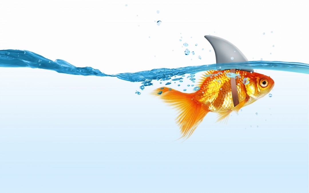 Stop Feeling Like A Small Fish In A Big Ocean